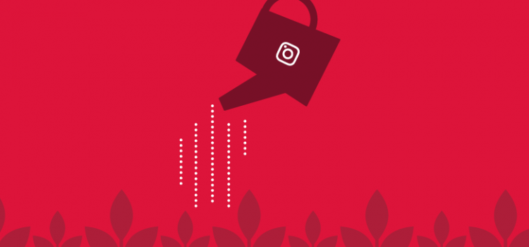 How to Grow Your Instagram Following: A Strategic Plan